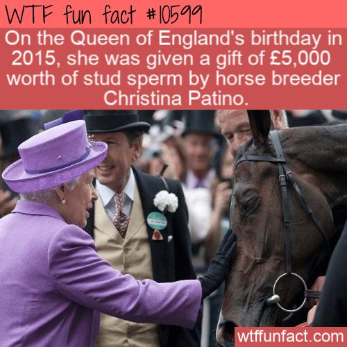 WTF Fun Fact - Gift Of Horse Semen