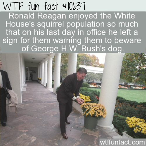 WTF Fun Fact - Reagan's Squirrel Note