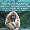 WTF Fun Fact – Sunrise Song