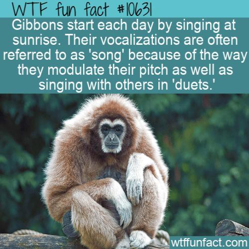 WTF Fun Fact - Sunrise Song