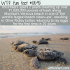 WTF Fun Fact – Trash Cleanup Brings Olive Ridley Hatchlings