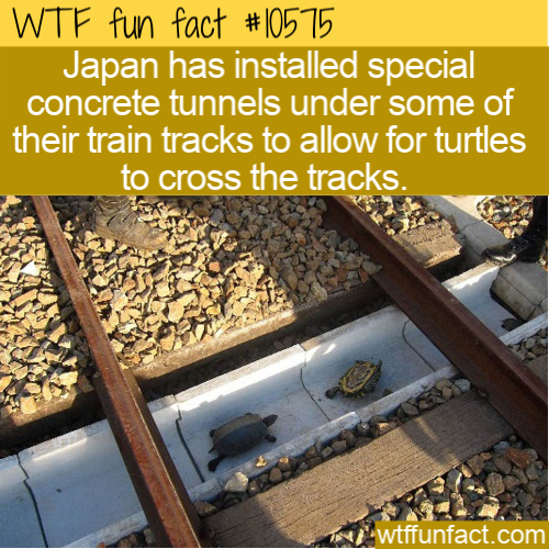 WTF Fun Fact - Turtle Railroad Crossing