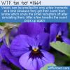 WTF Fun Fact – Violet Ionine