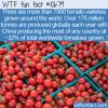 WTF Fun Fact – 7500 tomatoes