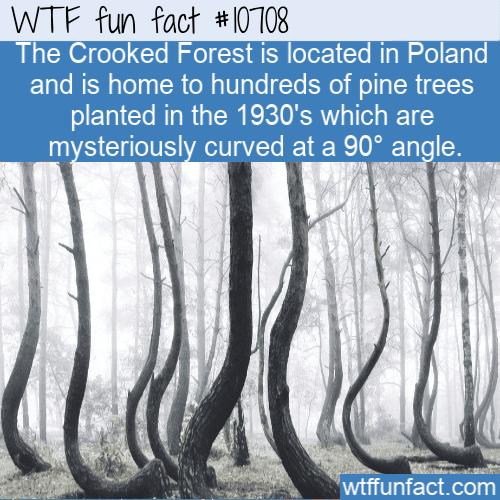 WTF Fun Fact - Amazing trees