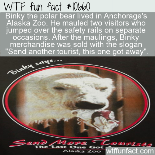 WTF Fun Fact - Binky Polar Bear