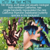 WTF Fun Fact – California Pipevine Swallowtail