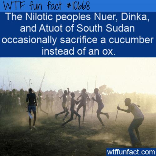 WTF Fun Fact - Cucumber Sacrifice