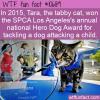 WTF Fun Fact – Tara Hero Cat