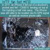 WTF Fun Fact – iPhone Fall