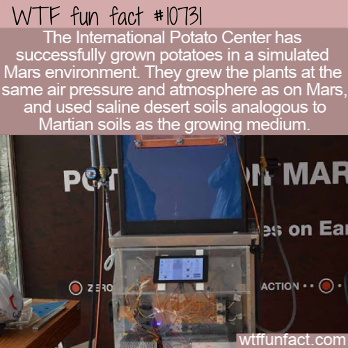 WTF Fun Fact - Martian Potatoes