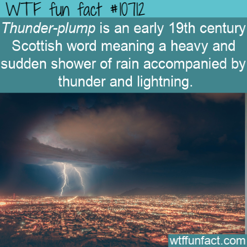 WTF Fun Fact - Thunder-plump
