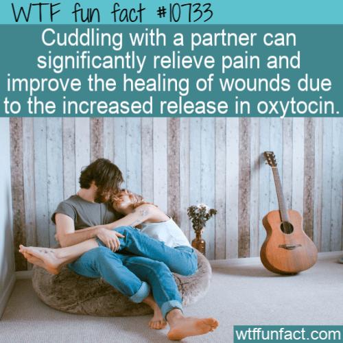 WTF Fun Fact - cuddling heals