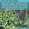 WTF Fun Fact – Brassica Oleracea