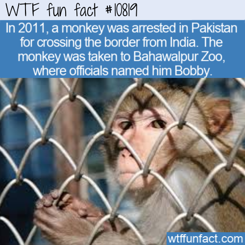 WTF Fun Fact - Arrested Monkey