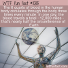 WTF Fun Fact – Blood Travels A Lot