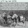 WTF Fun Fact – Casualty/Mercy Dog