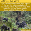 WTF Fun Fact – Mountain Gorillas