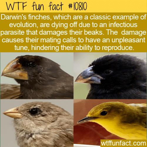 WTF Fun Fact - Darwin's Finches Dying