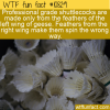 WTF Fun Fact – Left Wing Only