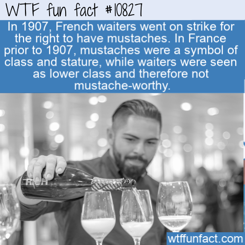 WTF Fun Fact - Mustaches For All