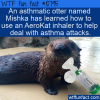WTF Fun Fact – Asthmatic Otter