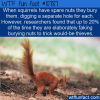 WTF Fun Fact – Squirrels Fake It