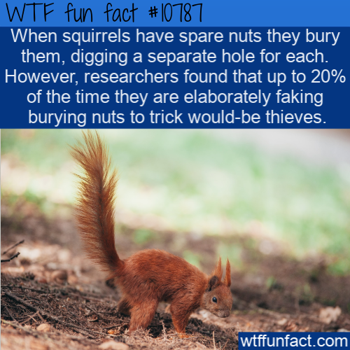 WTF Fun Fact - Squirrels Fake It
