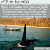 WTF Fun Fact – Killers of Eden