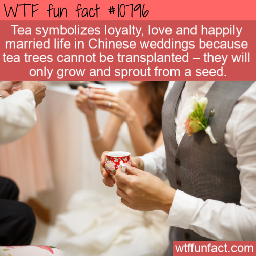 WTF Fun Fact - Wedding Tea
