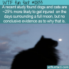 WTF Fun Fact – Full Moon And Animals