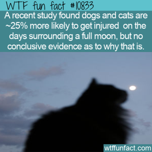 WTF Fun Fact - Full Moon And Pets