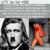 WTF Fun Fact – Estrogen In Hitler's Carrots