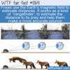 WTF Fun Fact – Fox's Rangefinder