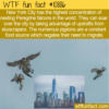 WTF Fun Fact – Peregrine Falcons'  NYC Home