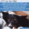 WTF Fun Fact – Puppy Dog Eyes