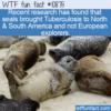WTF Fun Fact – Seals & TB