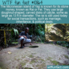 WTF Fun Fact – Yap & Rai