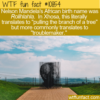WTF Fun Fact – Troublemaker
