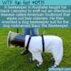 WTF Fun Fact – Bazz the Beekeeper
