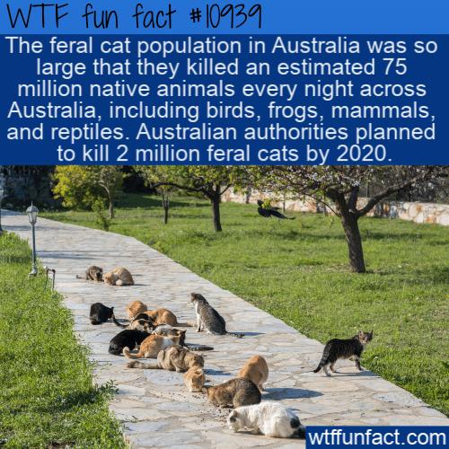 WTF Fun Fact - Feral Cats Gotta Eat