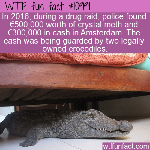 WTF Fun Fact - Guard Crocodiles