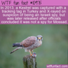 WTF Fun Fact – Kestrel Arrested