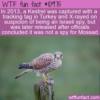 WTF Fun Fact – Kestrel Arrested