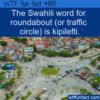 WTF Fun Fact – Kipilefti