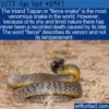 WTF Fun Fact – Most Venomous Snake