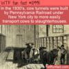 WTF Fun Fact – NYC Cow Tunnels