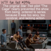 WTF Fun Fact – Star Trek Too Sexy