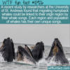 WTF Fun Fact – Whale Songs