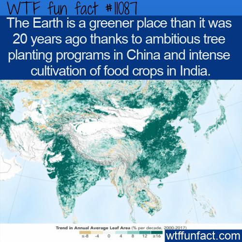 WTF Fun Fact - A Greener Earth